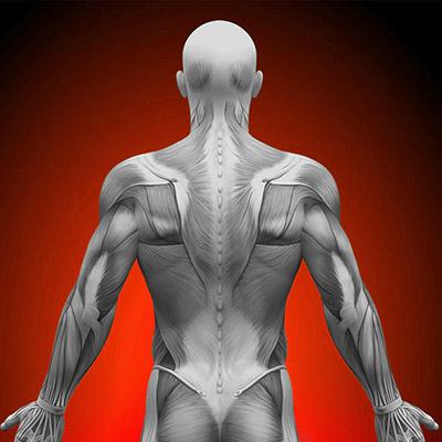 Болевые зоны на теле человека